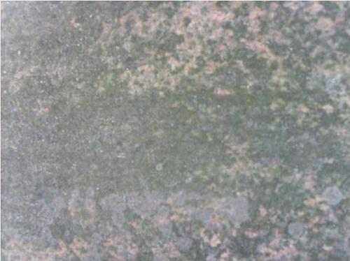 Биологический налет (водоросли, лишайники, грибы).