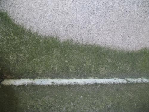 Налет водорослей на поверхности мрамора