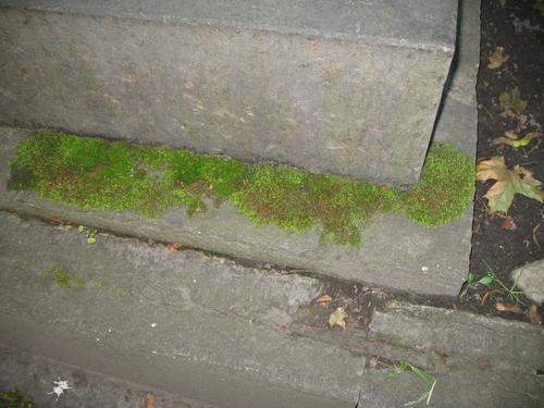 Дерновинки мхов на поверхности постамента памятника
