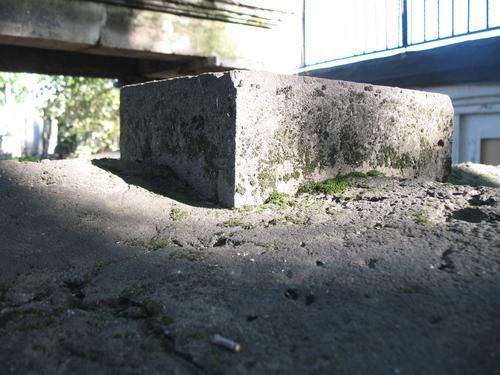 Накипные лишайники и дерновинки мхов на поверхности плитчатого известняка.