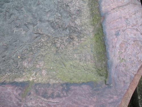 Налет водорослей на поверхности кварцита