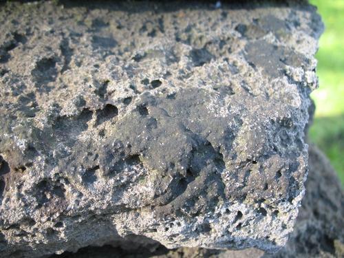 Слоевища накипных лишайников на поверхности известняка