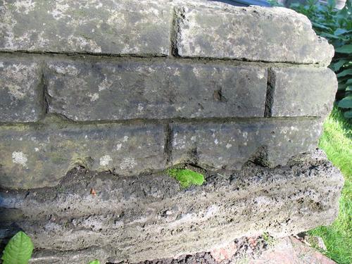 Слоевища накипных лшайников и дерновинки мхов на поверхности известняка