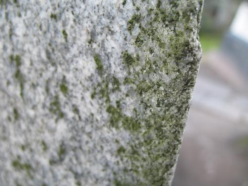 Налет водорослей на поверхности гранита