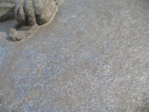 Грязевые наслоения и колонии темноокрашенных грибов на поверхности камня