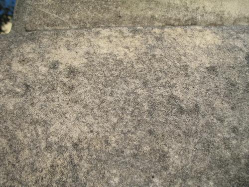 Колонии темноокрашенных грибов и слоевища накипных лишайников на поверхности мрамора