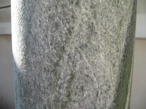 Налет водорослей и колонии темноокрашенных грибов на мраморе полуколонны