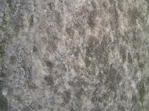 Колонии темноокрашенных грибов на мраморе полуколонны.