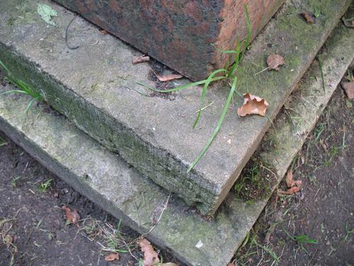 Налет водорослей на граните рапакиви. Налет водорослей, дерновинки мхов, высшие растения на путиловском известняке.