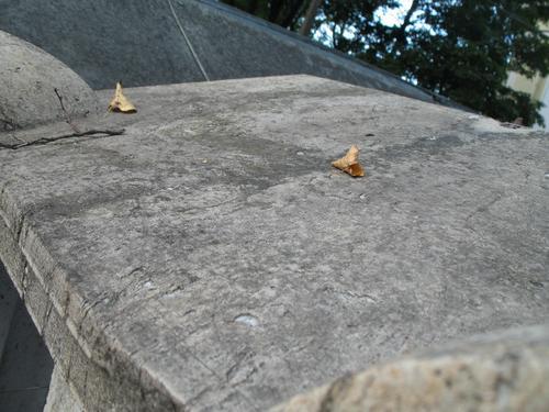 Грязевые наслоения и колонии темноокрашенных грибов на мраморе. Горизонтальная поверхность мрамора.