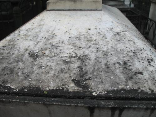 Биопленка с преобладанием колоний темноокрашенных грибов. Присутствуют грязевые наслоения.