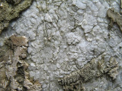 Микроколонии темноокрашенных грибов на поверхности мрамора