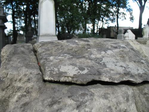Слоевища накипных лишайников на поверхности пудожского известняка (грот, горизонтальная поверхность).