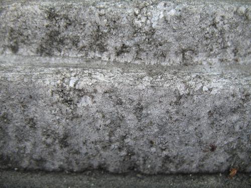 Колонии темноокрашенных грибов на поверхности крупнозернистого мрамора