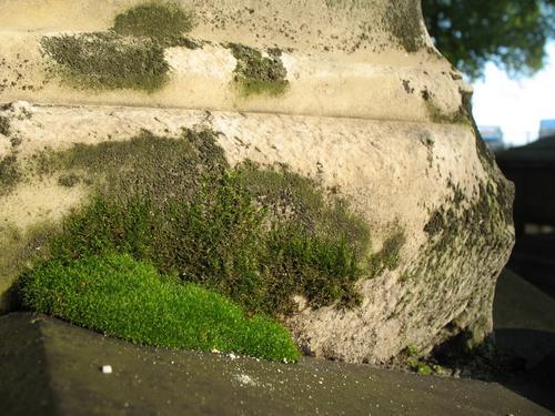 Налет водорослей. дерновинки мхов, колонии темноокрашенных грибов. Мощное выкрашивание мрамора.