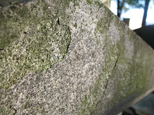 Налет водорослей и отслаивание фрагментов гнейсовидного гранита (постамент колонны).