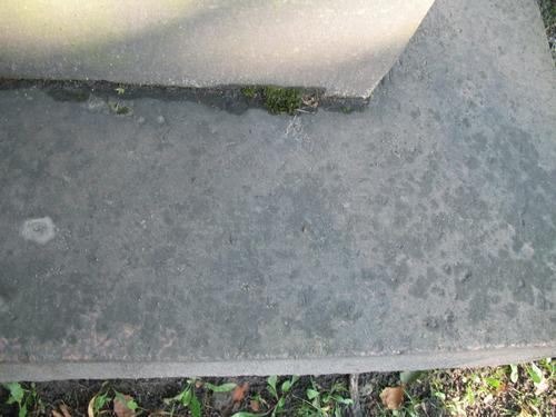 Слоевища накипных лишайников на поверхности гранита рапакиви (постамент).