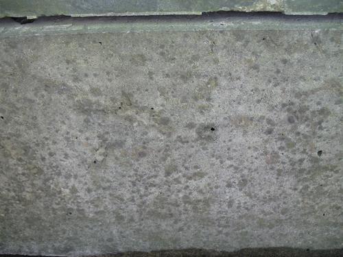 Слоевища накипных лишайников на поверхности путиловского известняка (постамент).
