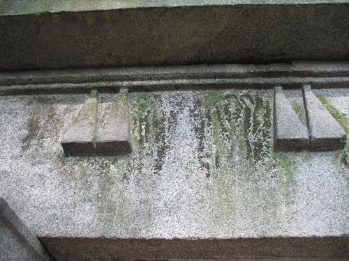Налет водорослей и грязевые наслоения на сером мелкозернистом гнейсовидном граните (сень).