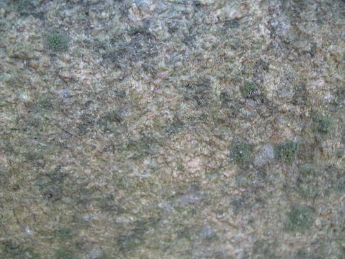 Слоевища накипных лишайников на поверхности розового порфировидного гранита (постамент памятника).