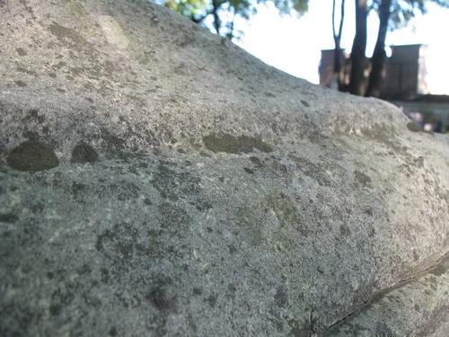 Выкрашивание поверхности мрамора. Слоевища накипных лишайников, колонии темноокрашенных грибов на поверхности камня.