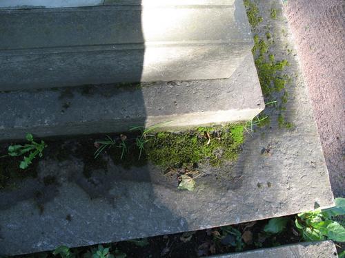 Дерновинки мха и высшие растения на постаменте памятника (путиловский известняк)