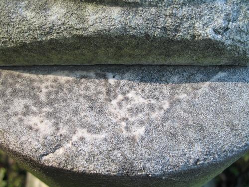 Колонии темноокрашенных грибов на поверхности мрамора (верхняя часть полуколонны)