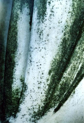Биологические наслоения на белом однородном мраморе.