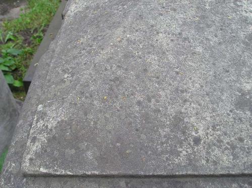 Фрагмент крышки саркофага. Видны многочисленные лишайники. Фото июля 2004 г.