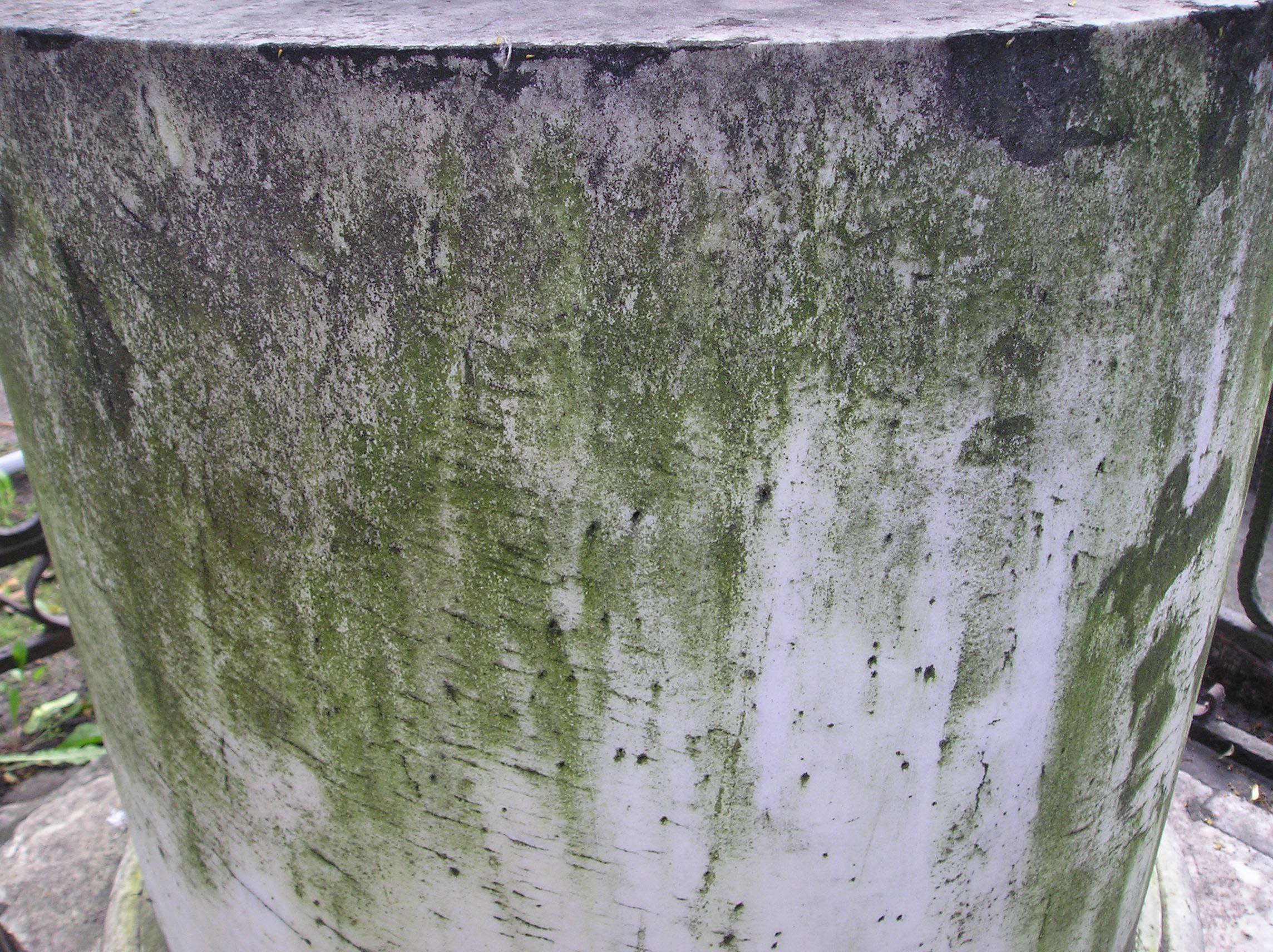 Видны водоросли, отшелушивание. Фото августа 2004 г.
