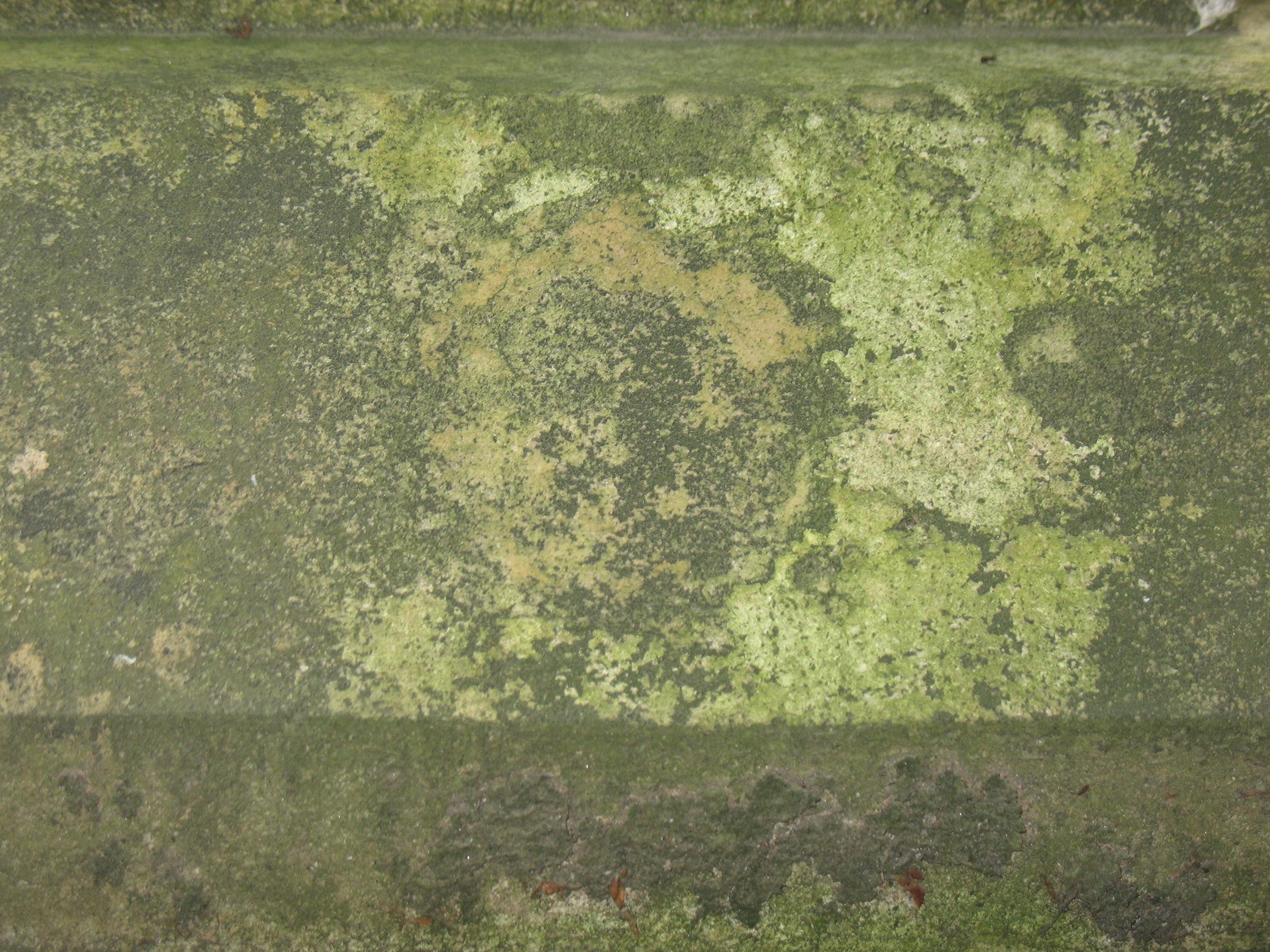 Налет водорослей на путиловском известняке