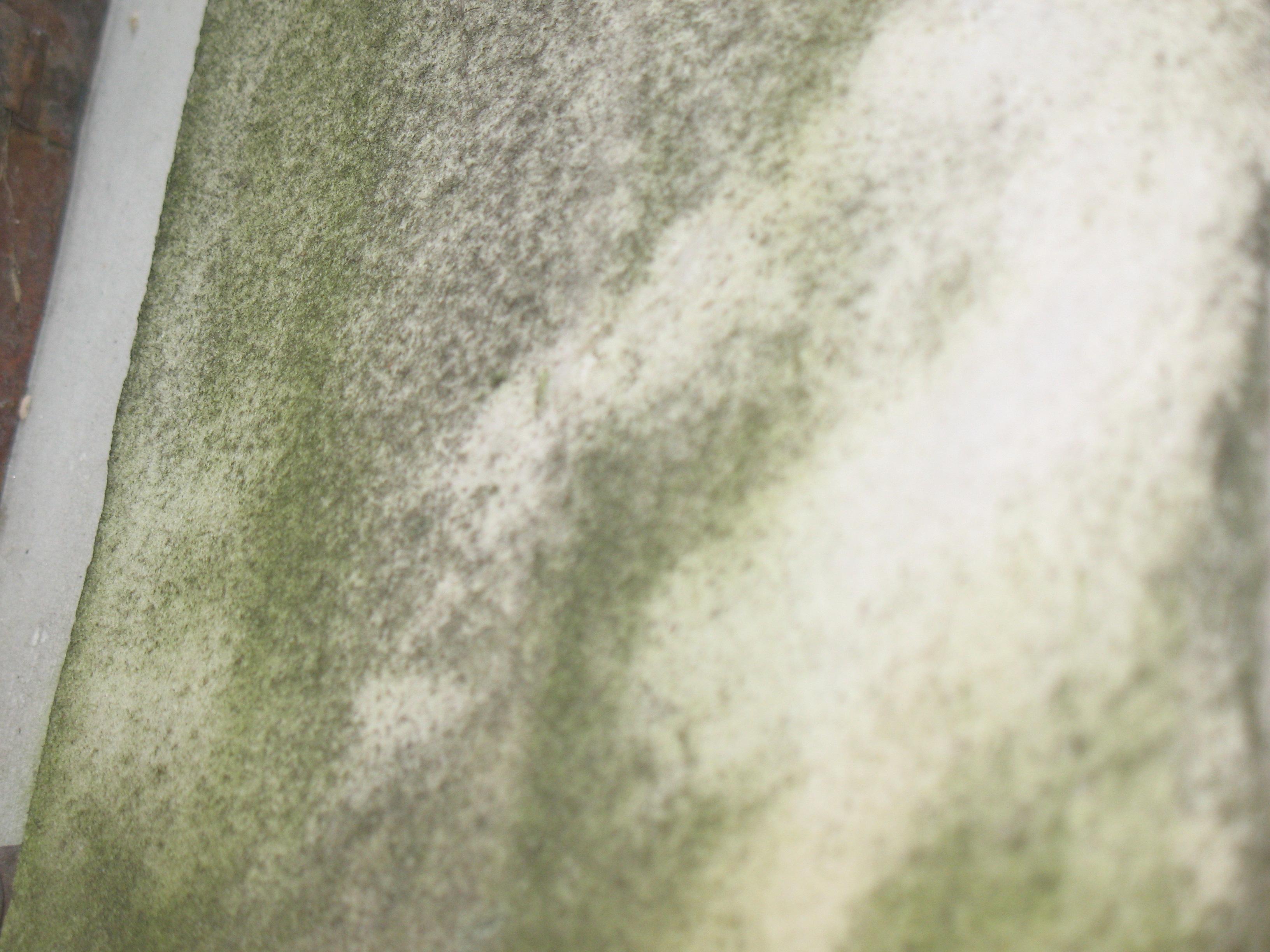 Налет водорослей и грязевые отложения на белом мраморе