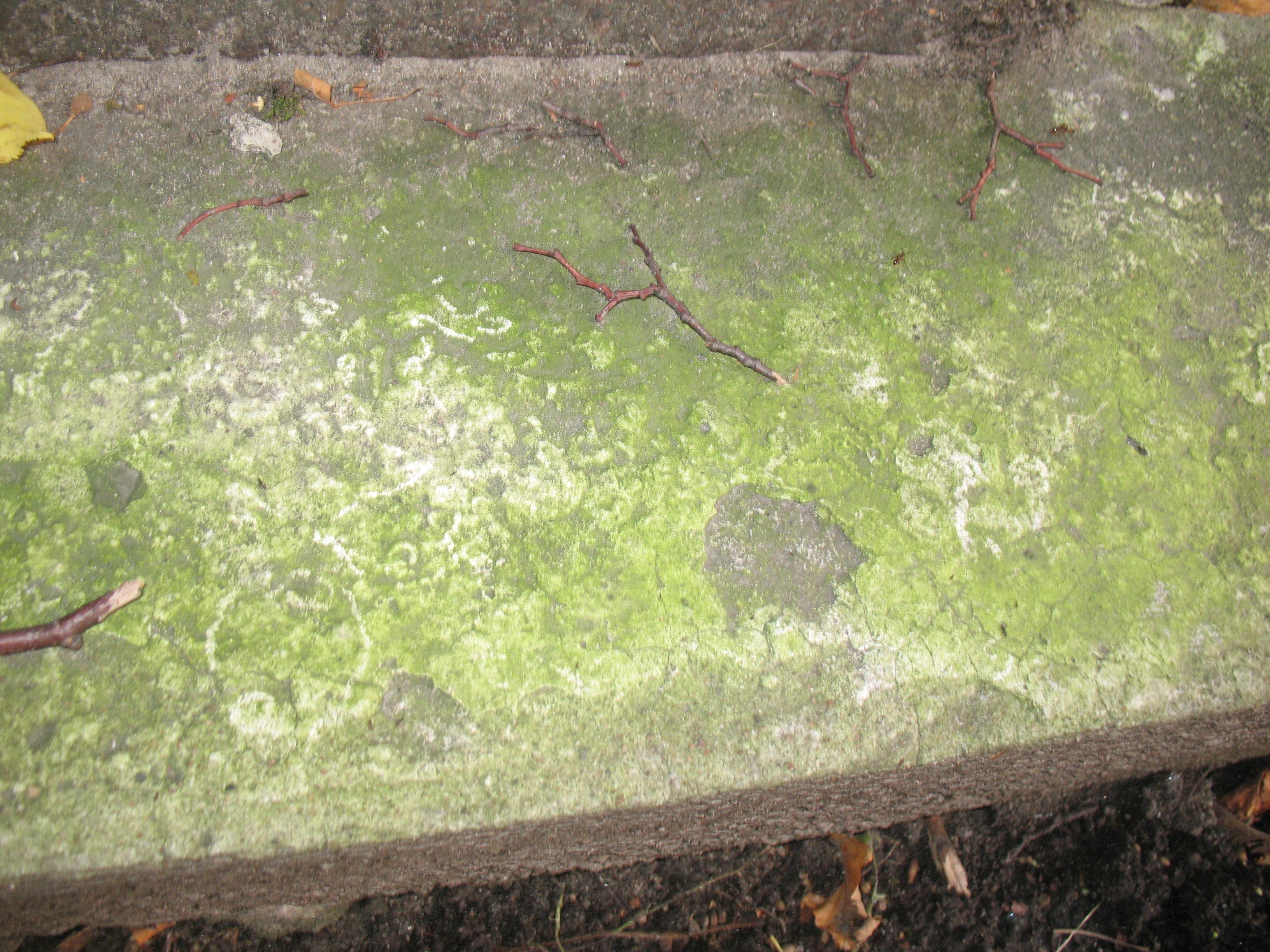 Отшелушивание и налет водорослей на путиловском известняке