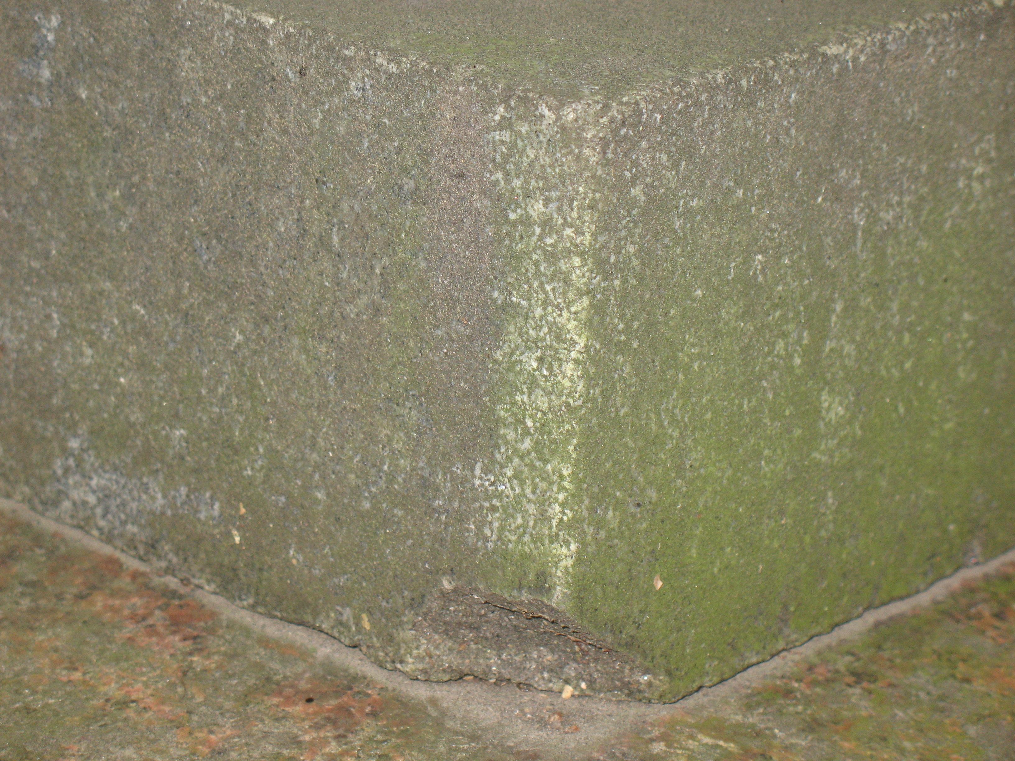 Налет водорослей на сером граните