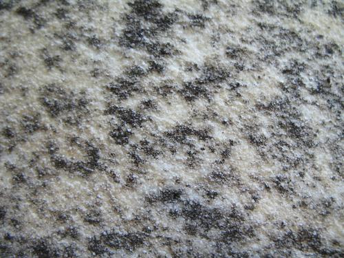 Колонии темноокрашенных грибов на мраморе колонны