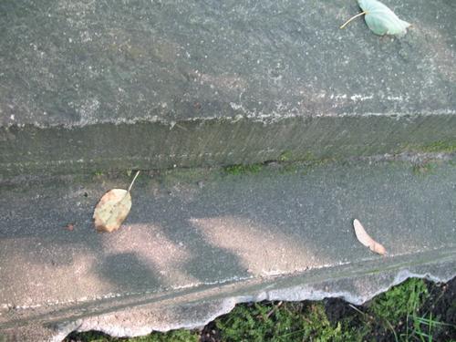Дерновинки мхов на стыке 2-х известняковых плит.