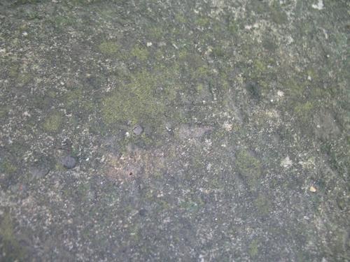 Слоевища накипных лишайников и колонии темноокрашенных грибов на поверхности известняка.