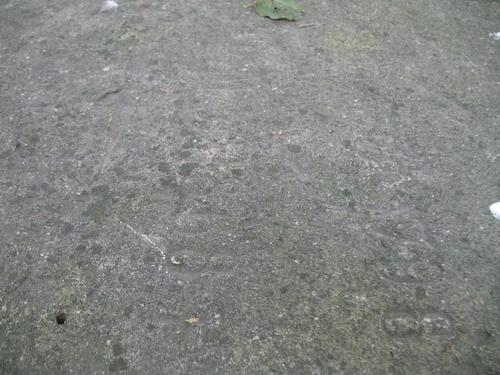 Слоевища накипных лишайников на поверхности известняка.