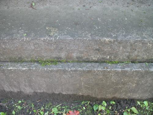 Дерновинки мхов на постаменте из путиловский плиты.
