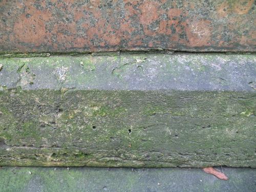 Налет водорослей на постаменте из путиловской плиты