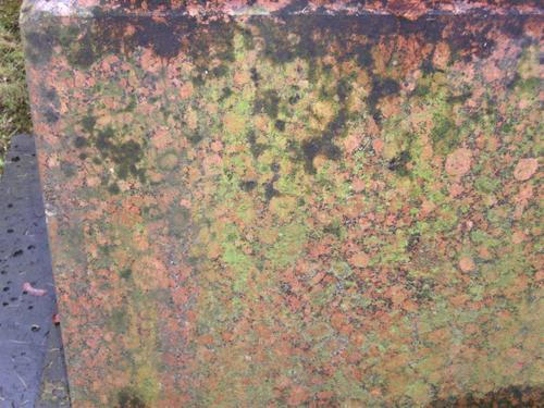 Биологические наслоения на красном овоидном граните. Восточная сторона.