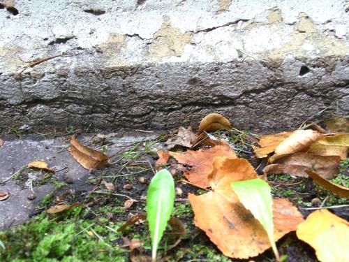 Расслаивание фундамента из плитчатого известняка. Сентябрь 2011 г. Южная сторона фундамента.
