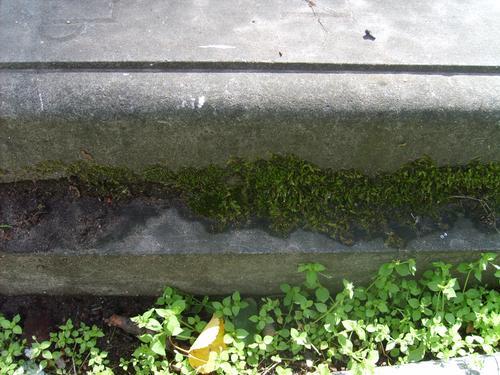 Биологический налет (грибы, лишайники, водоросли), мхи.