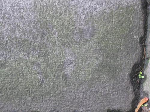 Налет водорослей на камне (западная сторона памятника).