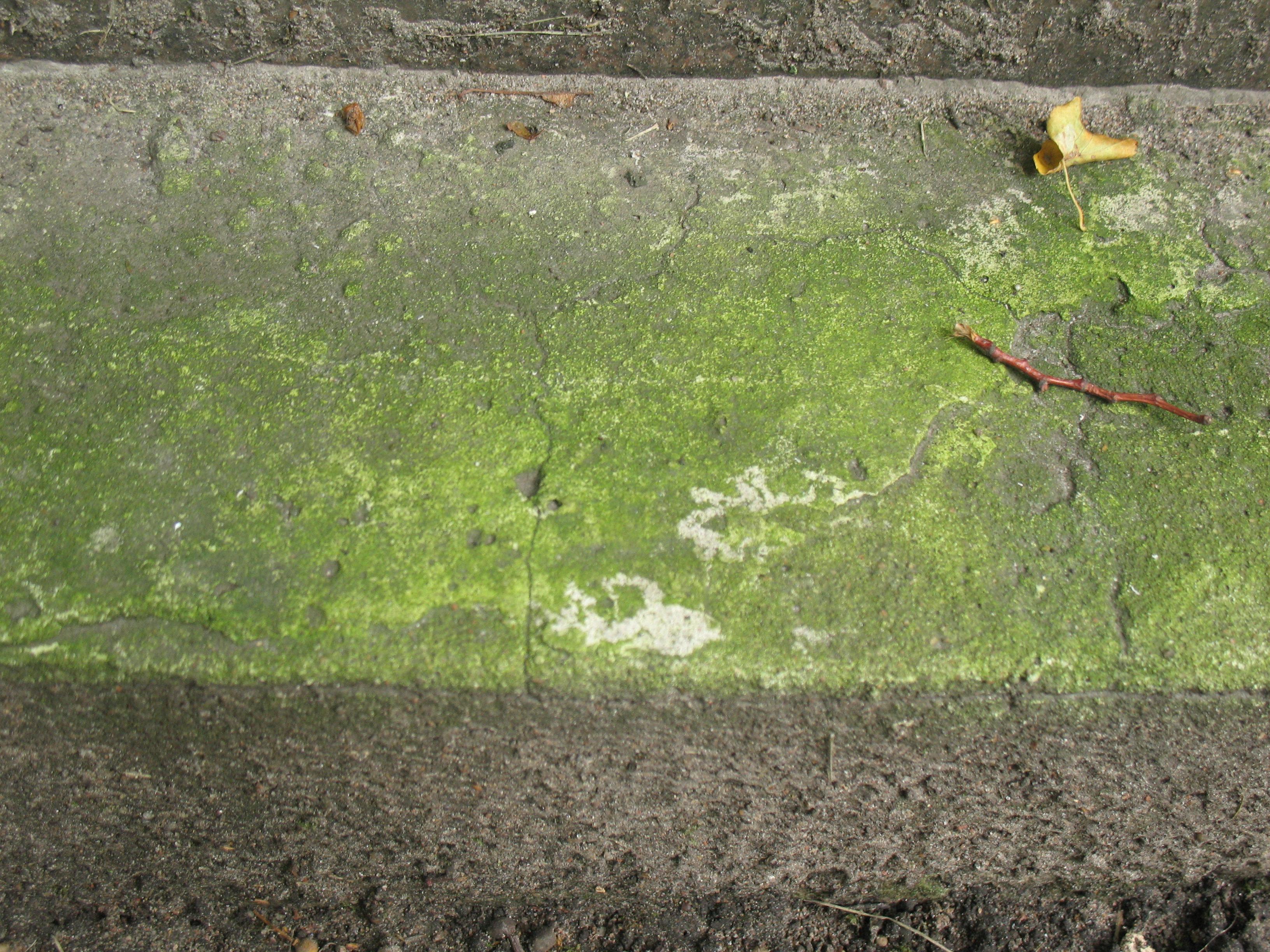 Налет водорослей на путиловском известянке