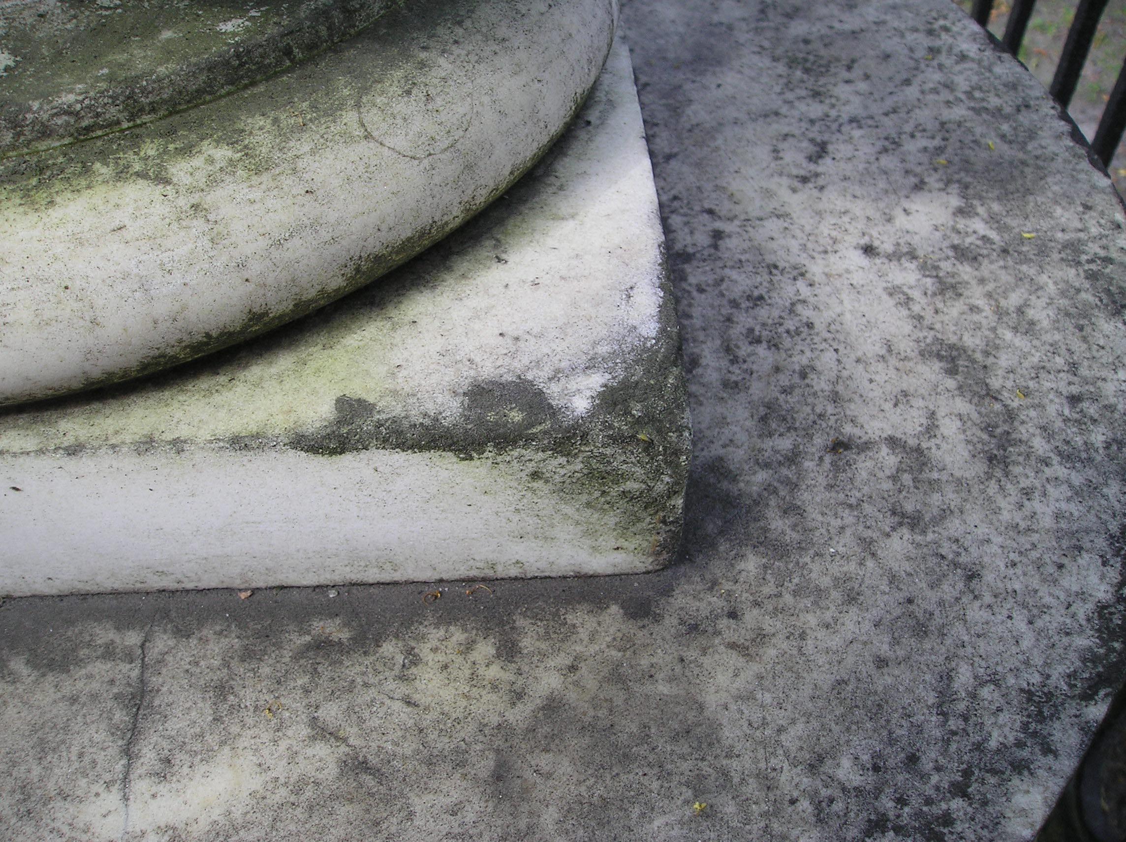 Фрагмент полуколонны. Видны колонии водорослей, грибы.Фото августа 2004 г.