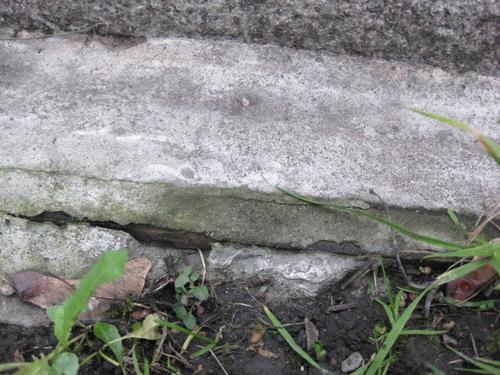 Биологический налет на основании (южная сторона)