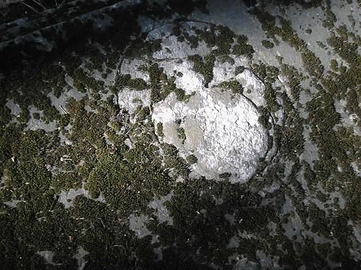 Фрагмент надгробной плиты. Видно сильно проявленное выкрашивание. Фото июля 2002 г.
