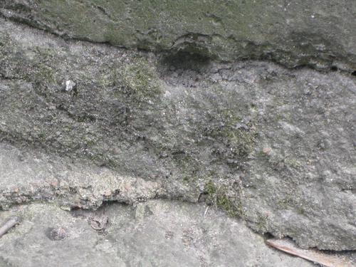 Выбоина неизвестного происхождения и налет водорослей на основании (южная сторона)