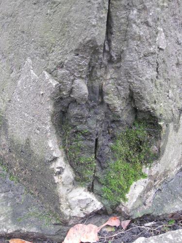 Выбоина неизвестного происхождения и мох (западная сторона)